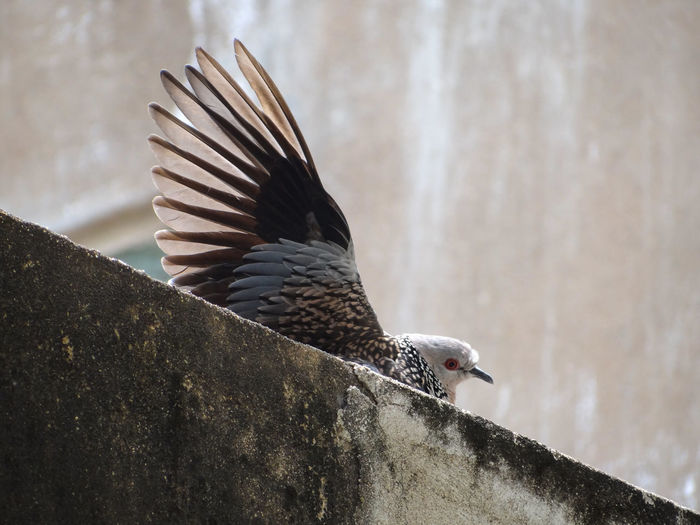 Close-up of a bird against wall