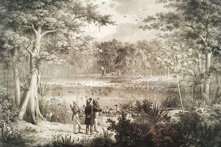 Desenho Paisagem Brasileira História Do Brasil à Mão Desenho Paisagem Brasileira