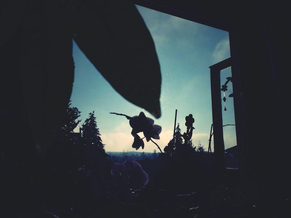 erholen in der Sonne an Neujahr Silhouette Orchidee