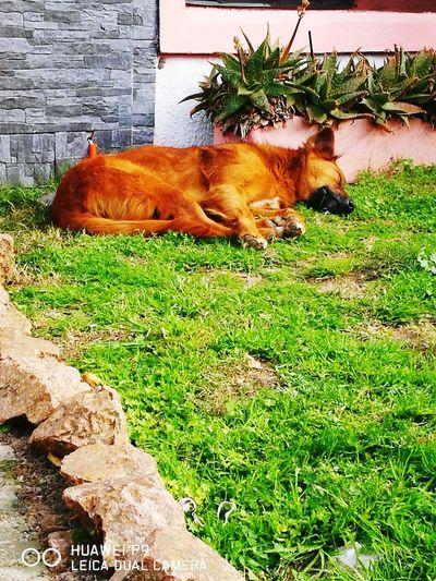 Ella duerme todo el dia jajajaja Shara