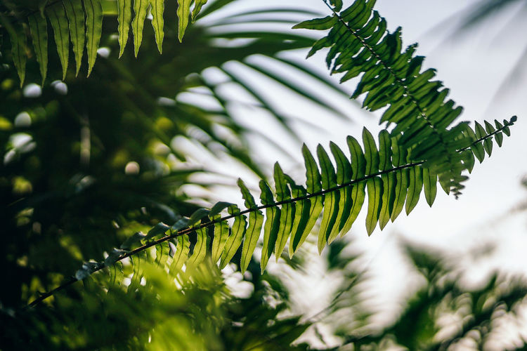 Stunning view of a tropical branch photographed in evening light. Lushful leaves of a tropical plant. Tropical Photography. Beautiful Freshness Green Growth Natural Nature Plant Tree Backgrounds Beauty In Nature Bloom Blooming Blossom Blossoming  Botany Branch Design Evening Garden Leaf Leaves Outdoors Season  Sky Spring