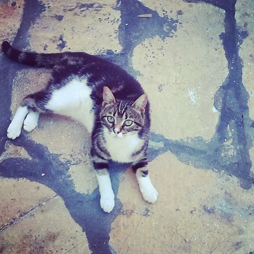 Beautiful Cat Greece Ipsos Light Likeit Verycool Smiles Tweet Tags4like Lovely SIMPLY
