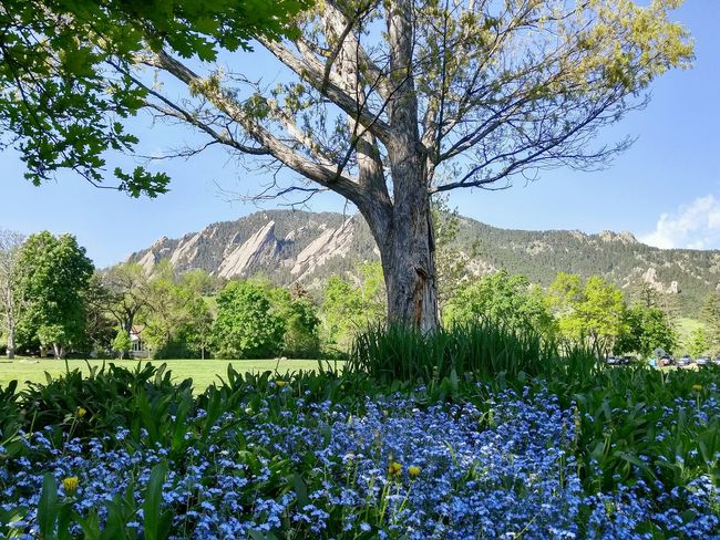 A nice morning at Chautauqua Park. Flowers Landscape Flatirons Mountains Beauty In Nature Springtime Outdoors Public Land