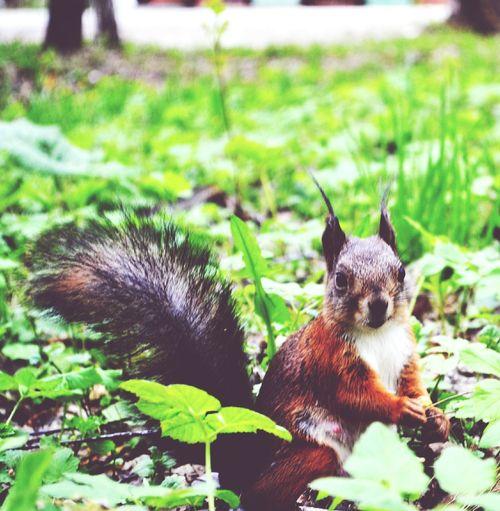 Summer ☀ Tomsk Region, Animals Collection