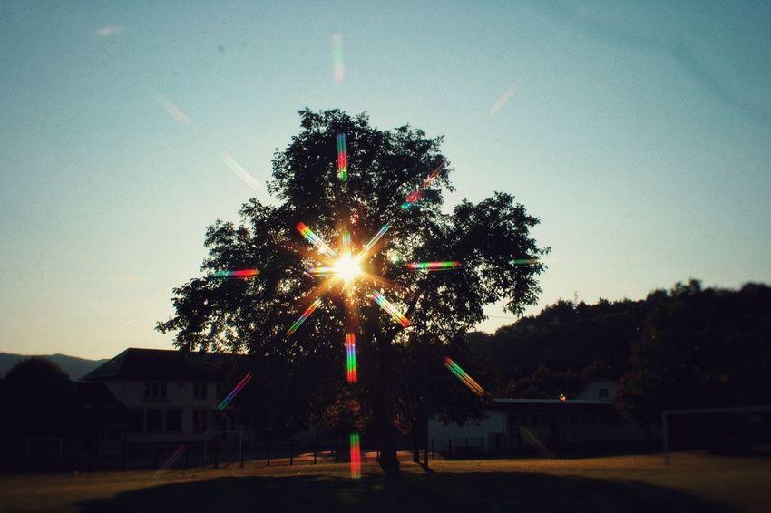 Tree Sky Sunlight Nature
