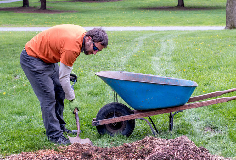 Side view of man with wheelbarrow working in park