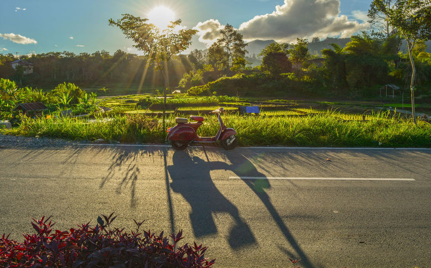 Shadow of man riding bicycle on plants
