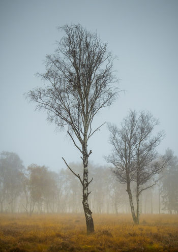 Duvenstedt Germany Duvenstedter Brook Trees Bare Tree Beauty In Nature Branch Dead Plant Environment Field Fog Hazy  Isolated Land Landscape Nature No People Non-urban Scene Outdoors Plant Remote Scenics - Nature Sky Solitude Tranquil Scene Tranquility Tree