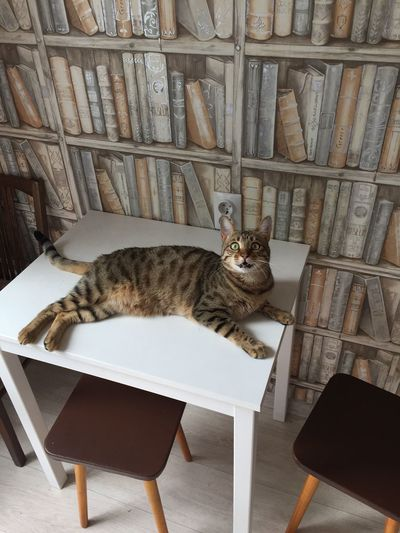 High angle view of cat sitting on chair