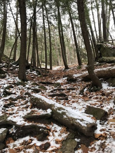 Hiking around early Winter Vermont Beauty In Nature Beauty Snow Walking Hiking Tree Plant Land Forest Tranquility Trunk Tree Trunk