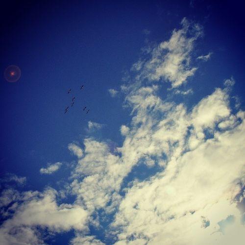 Blue Birds Sky