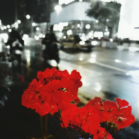On The Way Home Nightphotography Red Flower Shanghai❤ Streetphotography