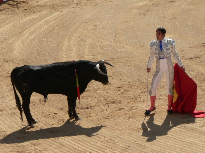Animal Themes Bull Fight Cattle Day Domestic Animals Full Length One Man Only Shadow Standing