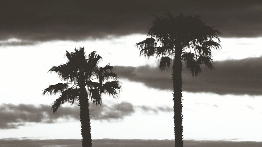 Palmtrees against cloudy sky Monochrome _ Collection Monochrome Black & White Black And White EyeEm Selects Tree Water Tree Trunk Rural Scene Silhouette Single Tree Sky Cloud - Sky Landscape Storm Cloud Palm Tree Atmospheric Mood Palm Frond Palm Leaf Overcast Date Palm Tree