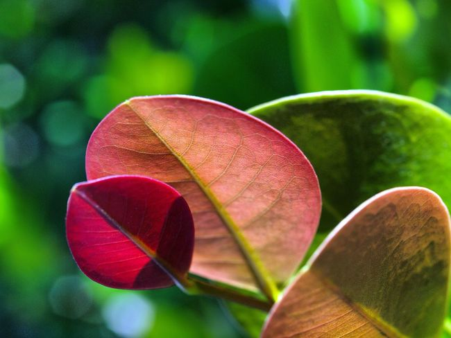 Leaves Hello World EyeEmNewHere Helloworld Leaves Leave Leaves🌿 Tree Plants Flowers Nature Nature_collection Nature Photography EyeEm Best Shots EyeEmNewHere EyeEm Nature Lover Sport Red Close-up Green Color Plant