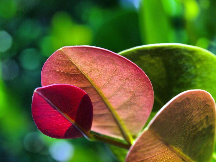 Leaves Hello