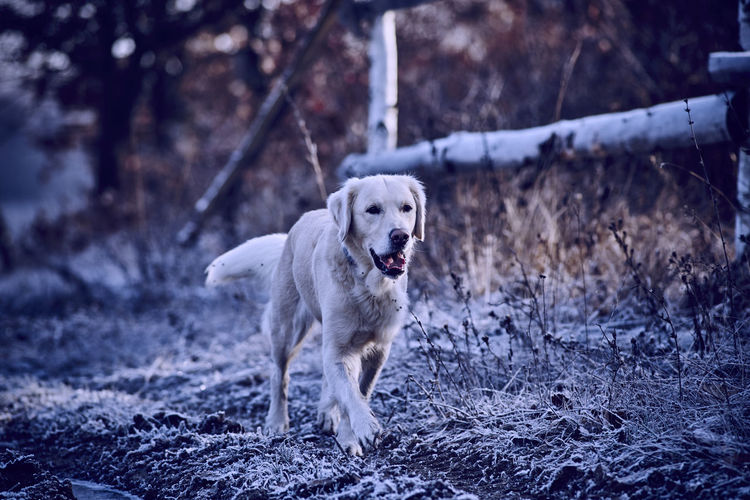 Adventure Animal Animal Photography Animal Portrait Dog Dog Portrait Hikingadventures Outdoors Pets Winter It's Cold Outside