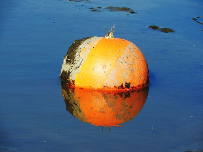 No Ordinary Bouy ~ Mud Covered In Mud Reflection Stem Pumpkin Ontario Water Reflections Water Logged Vegetable Thanksgiving Gourd Pumpkinpatch Water Colored Background Close-up Food And Drink Orange Color Buoy Puddle Standing Water