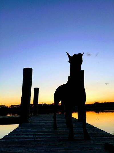 First Eyeem Photo Sunset Silhouette Animal Themes Mammal Domestic Animals One Animal Sky Full Length Outdoors Nature Water Clear Sky No People Beauty In Nature Day