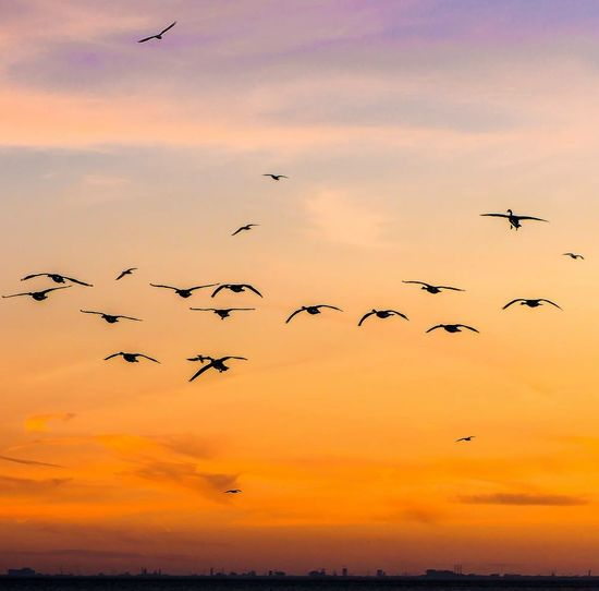Silhouette of birds flying over clouds