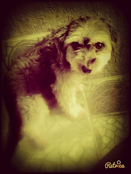 I Love My Dog♡♥