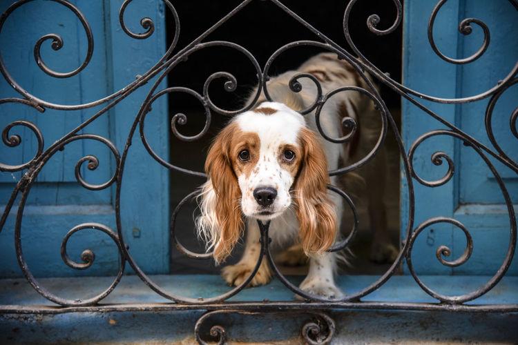 Portrait of dog seen through metal grate