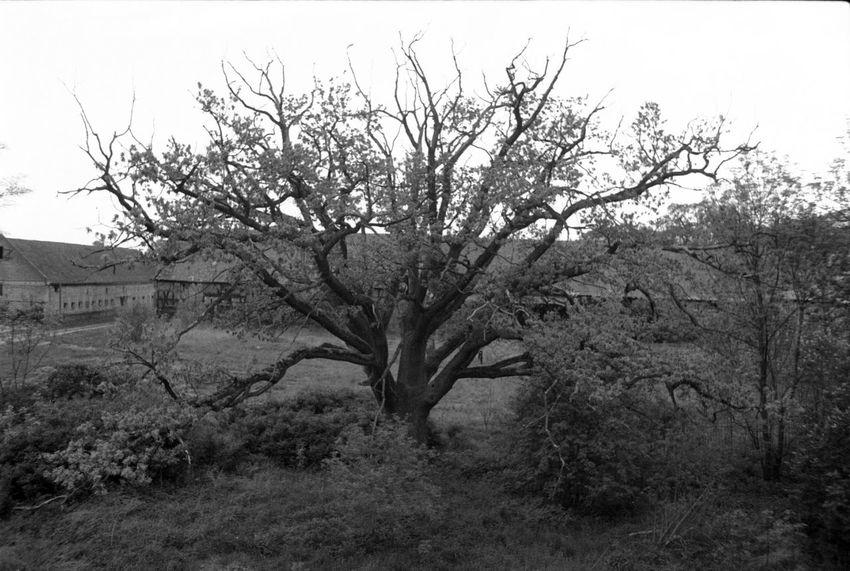 Analogue Photography Trees