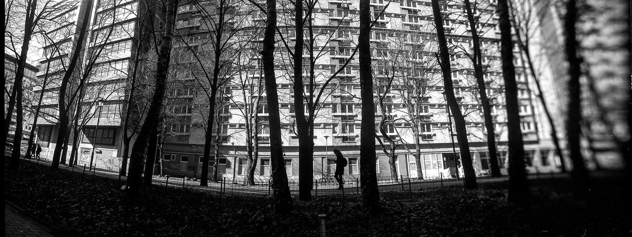 HORIZONT Panoramic The Art Of Street Photography Horizont Panoramic Film Photography Analogue Photography Street Photography The Week on EyeEm Capture The Moment Bnw Black And White Monochrome Panoramic Film Rollei Wide Tree Forest Plant Land Trunk Tree Trunk WoodLand Nature Growth Day No People Tranquility Outdoors Architecture Built Structure Non-urban Scene Environment Tranquil Scene Tall - High Beauty In Nature Bamboo - Plant