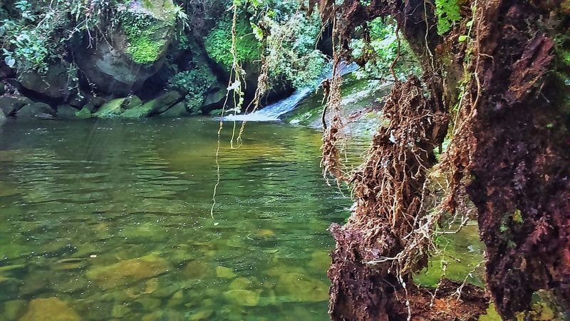 Tree Nature Waterfall Sunshine Sun Water Placeinthe_sun Powertotheplanet Photography Brazil Trip Peace Tranquillity Love Freedom Landscape Amazing Namaste ❤ Thanks God Tree Day Beauty In Nature Thanksgod Reflection