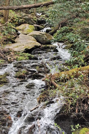 Waterfall in the Smokey Mountains Nature Day No People Tranquility Sunlight Beauty In Nature Plant Motion High Angle View Outdoors Tranquil Scene Backgrounds Cold Temperature Water Full Frame Clean Land Growth Green Color Moss Summer Exploratorium