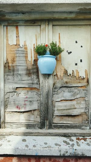 'Sweetness' Flower Flowerpot Vase Colour Innocence Restoration Abandoned Peeling Walls Wood - Material Nature Architecture Wood History Alaçatı Çeşme -- B