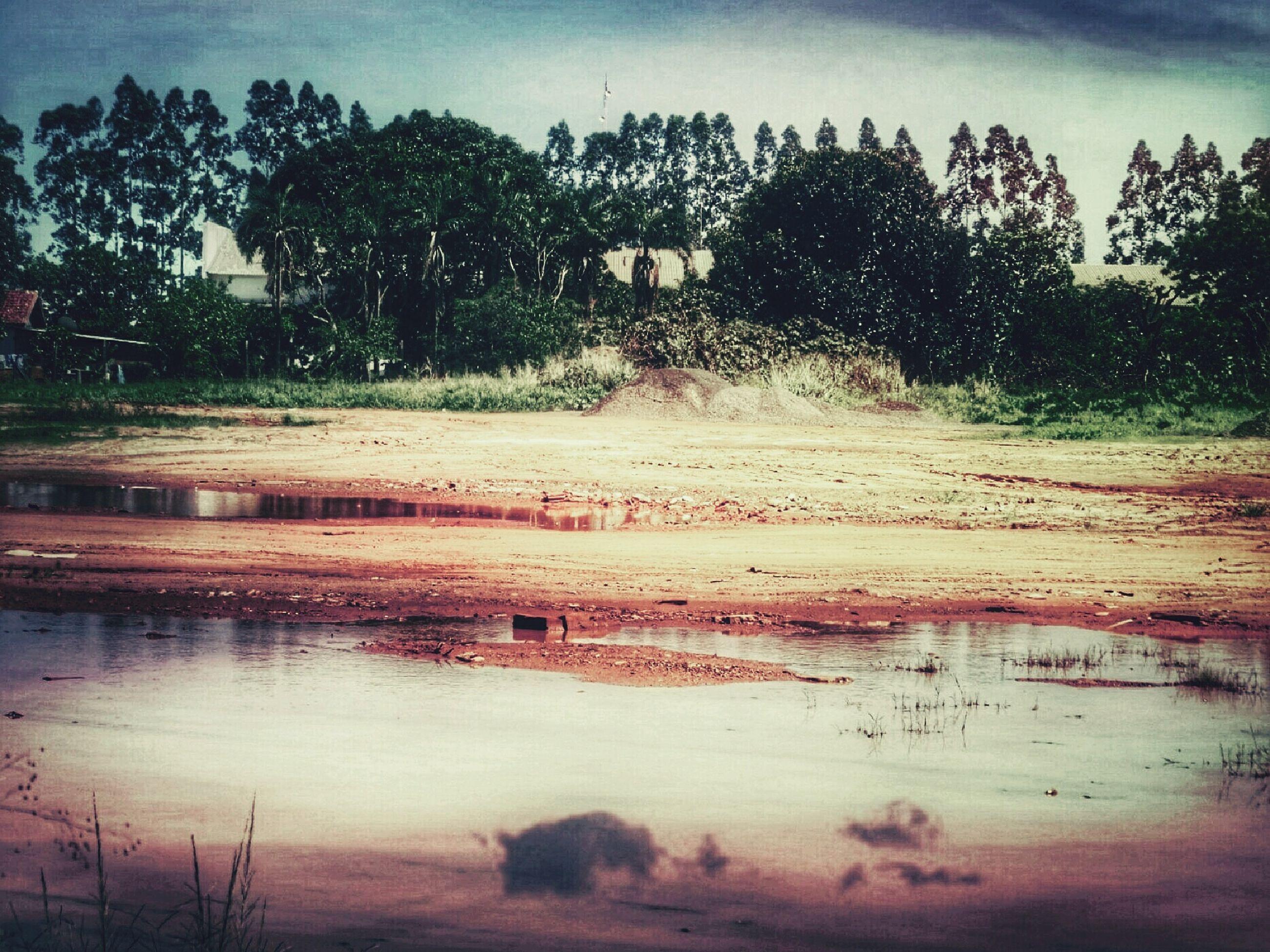 reflection, water, tree, nature, sky, outdoors, day, no people, palm tree, wet, rainy season, lake, scenics, rainfall, beauty in nature, close-up