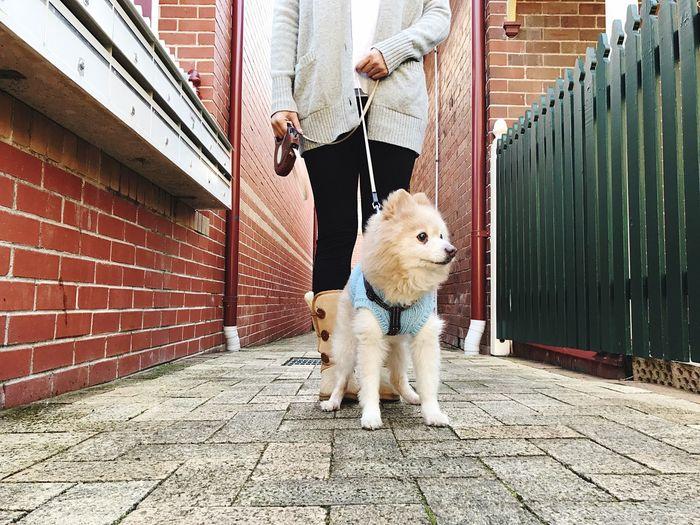 EyeEm Selects | Saturdaymorning Walking Around with My Boo 🦁