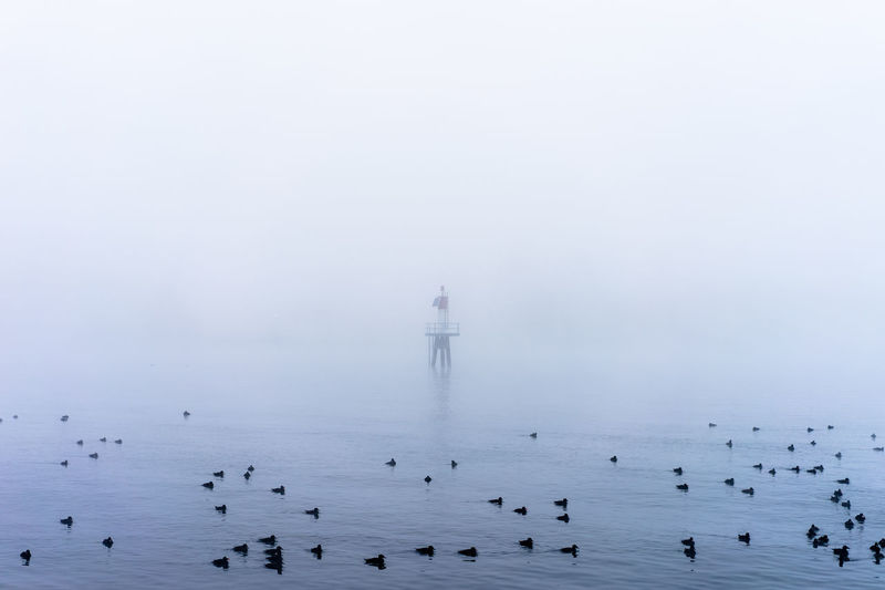 Ducks swimming on lake in foggy weather