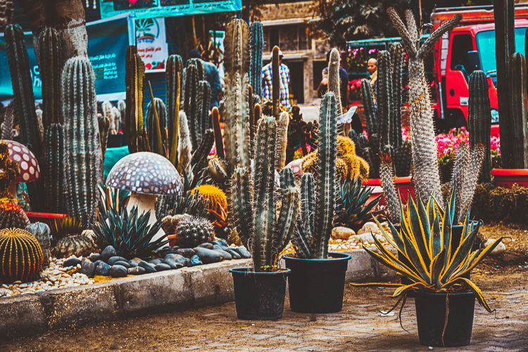 Check This Out Popular Photos Exceptional Photographs Garden Cactus Variation Choice Architecture Built Structure Decoration No People Day For Sale Art And Craft Animal Building Retail  Animal Themes Creativity Nature Large Group Of Objects Market Outdoors Building Exterior Sale