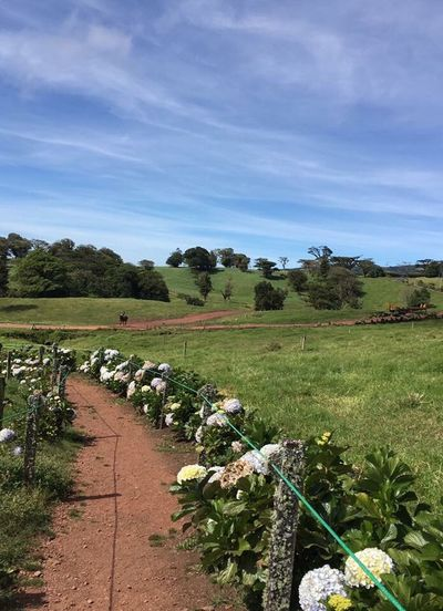 Costa Nature Naturaleza Flowers Pad Green