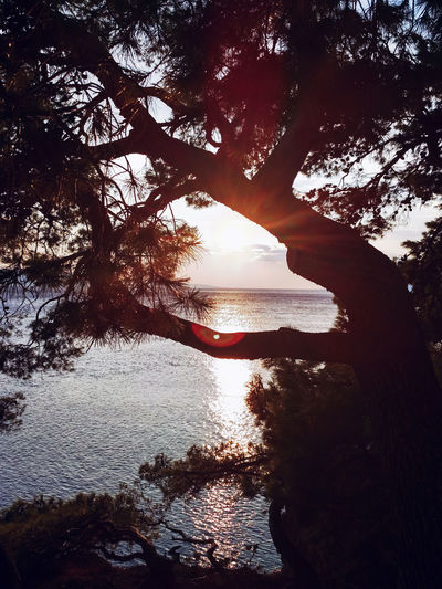 Beauty In Nature Black Composition Day Horizon Nature Outdoors Silhouette Sky Summer Sunset Sunset_collection Tranquil Scene Tree Vacation Water