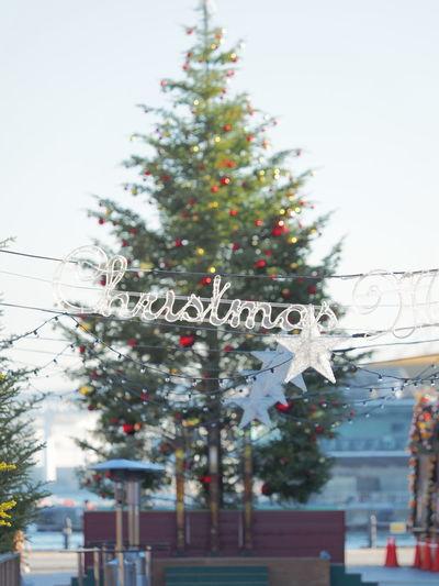 ツリーさん、今年もお疲れさまでした! Christmas Tree Merry Christmas! Snapshot Snapshots Snap City View  Cityscape Enjoying Life Happy Cristmas Cityscapes