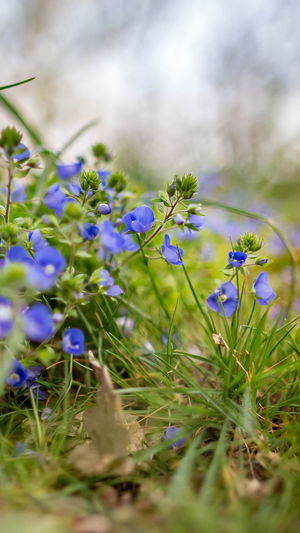 Flower Flowering Plant Plant Selective Focus Freshness Beauty In Nature Fragility Vulnerability  Growth Close-up Nature Land No People Day Green Color Purple Field Outdoors Springtime Grass Flower Head Flowerbed Backgrounds