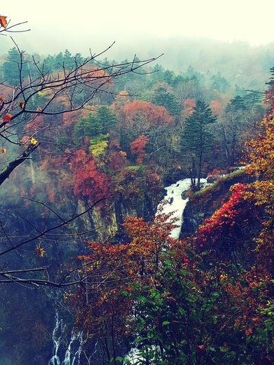 Kegon Falls Kegonwaterfall Nikko Tochigi Prefecture Japan Nature No People Autumn Outdoors Beauty In Nature Scenics Fog Rural Scene Tree Landscape Vscocam Vscox Travelphotography Travel Destinations Phoneography Samsungphotography Scenery Rainy Day