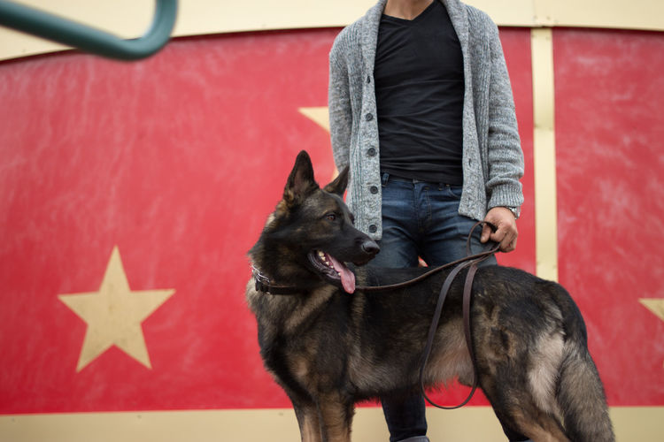 Midsection of man standing with belgian malinois against wall