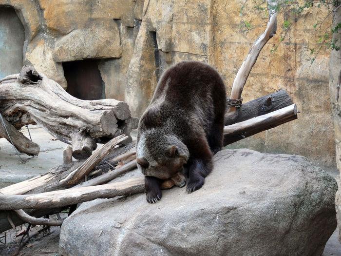 Parc Zoològic |