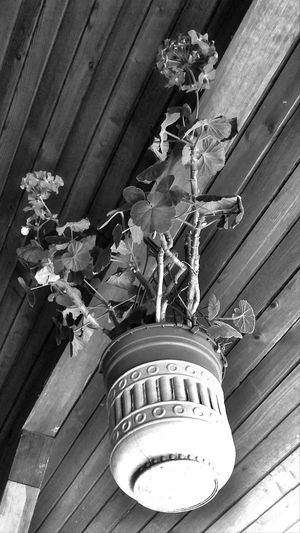 EyeEm Black And White Blackandwhite Photography Flower Plant Life Levitation Architecture Built Structure Building Exterior Close-up Spiral Staircase Ceiling Architecture And Art Ceiling Light  Architectural Design Love The Game