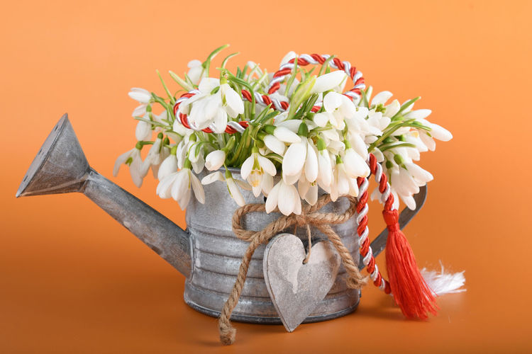 Close-up of flowering plant on table against orange background