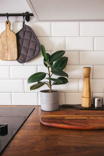 Potted plant on table at home at the kitchen table