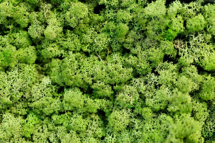 Moss wall,