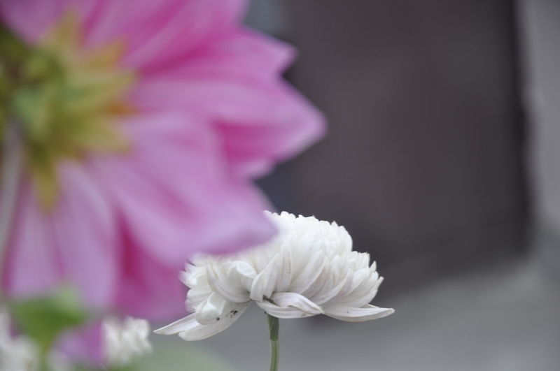 White beauty!! First Eyeem Photo