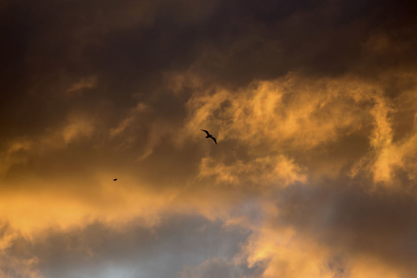 Bird Cloud - Sky Vertebrate Animal Themes Animals In The Wild Sky Animal Wildlife Flying Animal Sunset One Animal Beauty In Nature Mid-air Silhouette Low Angle View Nature No People Scenics - Nature Tranquil Scene Dramatic Sky Outdoors
