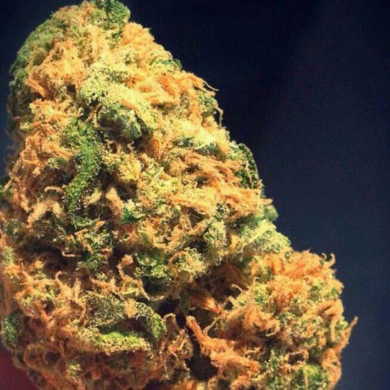 Marijuana Iloveweed Highlife Weed