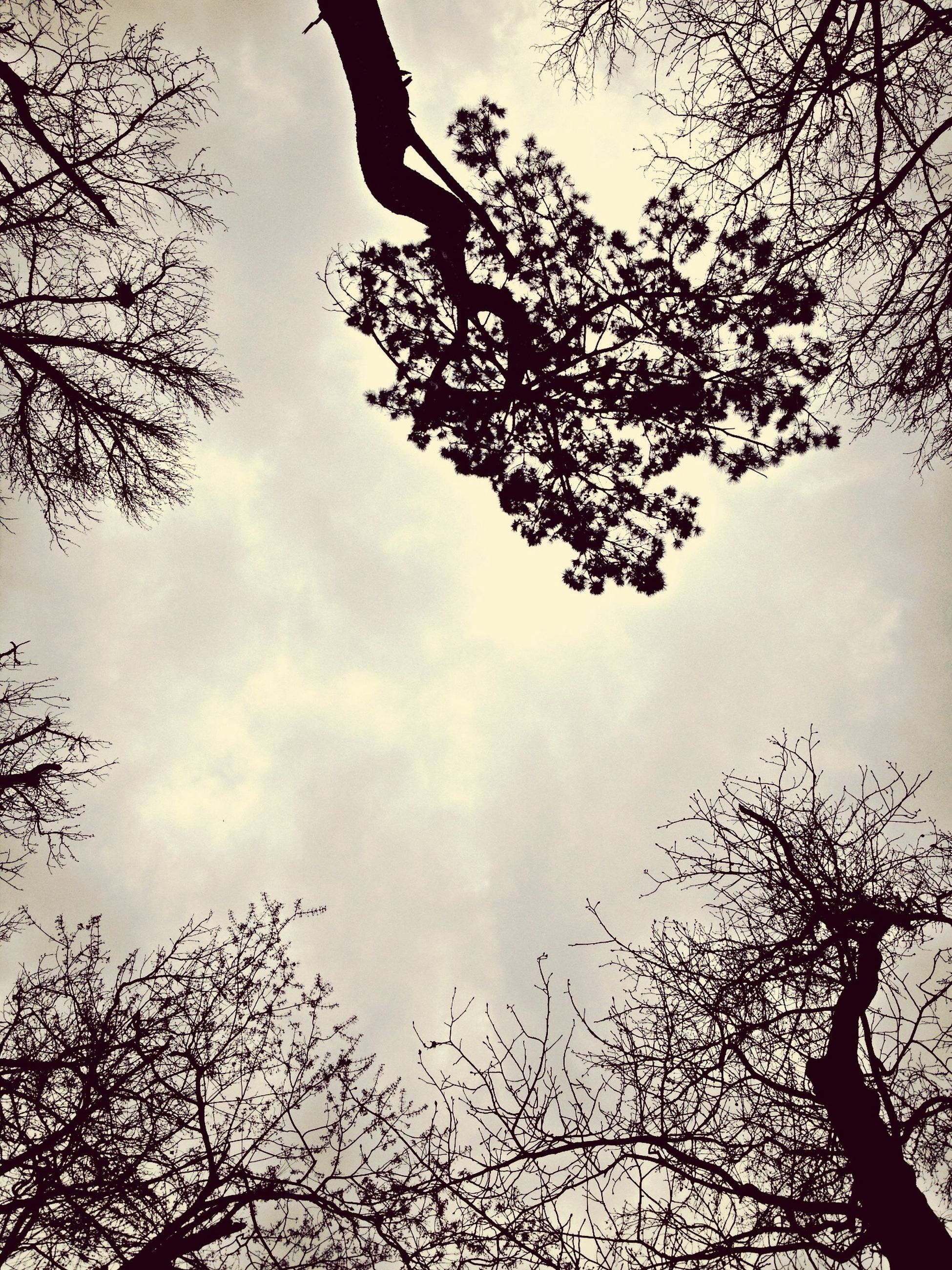 tree, low angle view, sky, branch, bare tree, silhouette, cloud - sky, nature, cloud, tranquility, outdoors, day, cloudy, beauty in nature, scenics, growth, tree trunk, dusk